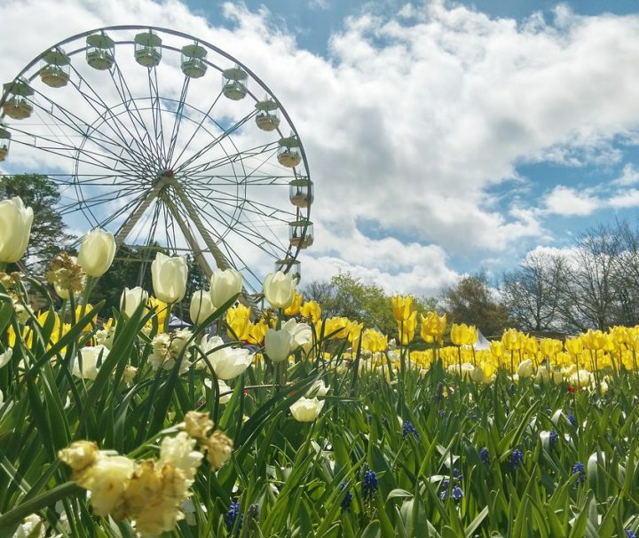 floriade tours, tours to floriade, tours to snowy mountains, ned kelly area tours
