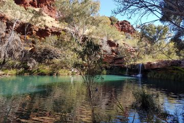 tours to karijini, tours to mt augustus, wildflower tours to mt augustus