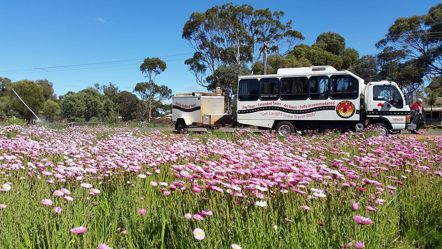 wa wildflowers, wa wildflower tours, wildflower tours wa